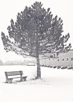 Tree of Wisdom - Dennis Park, Stewiacke. Stewiacke, Nova Scotia. ©Marg Robins www.stewiackenovascotia.com
