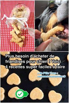 easy and healthy dog cake recipes Healthy Dog Biscuit Recipe, Dog Biscuit Recipes, Dog Cake Recipes, Dog Food Recipes, Baby Dogs, Pet Dogs, Diy Pour Chien, Food Dog, Dog Corner