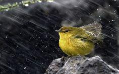 Get out if the rain, little bird!