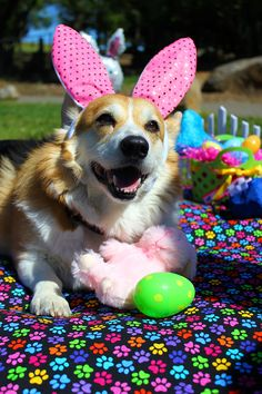 Abby was all smiles when she found her first Easter treat: a pink bunny that matched her ears!