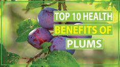 Top 10 Health Benefits of Plums Effective Work For Skin & Hair Health Benefits, 10 News, Top, Crop Shirt, Shirts