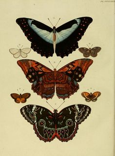 Butterfly Caterpillar with Snake's Tongue Photo Wall Collage, Collage Art, Tattoo Und Piercing, Butterfly Art, Butterflies, Vintage Butterfly, Hippie Art, Aesthetic Art, Cute Wallpapers