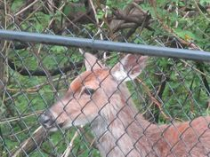 Deer Fenced Out 3