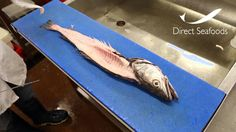 Direct Seafoods: How to Fillet a Hake (Round Fish) Hake Recipes, Seafood, Fish, Videos, Sea Food, Pisces, Seafood Dishes