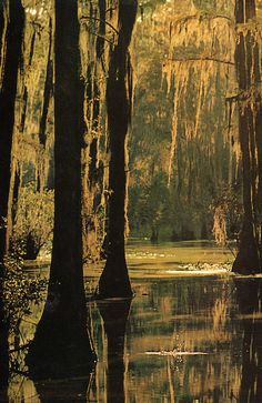 loving swamps and the critters that live there....& the spanish moss :)