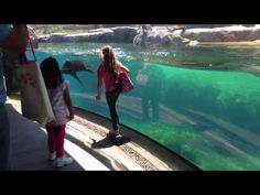 Incredible, Watch How This Seal Reacts To A Little Girl Falling Down.