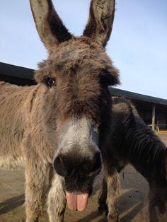 Island Farm #Donkey Sanctuary UK @ http://www.donkeyrescue.co.uk