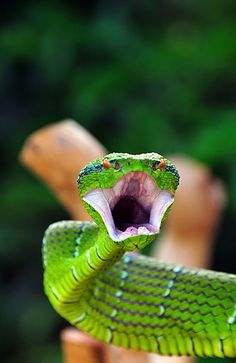 flowerling: Anger of The Viper by Cie Shin