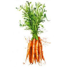 : : Vegetables - Georgina Luck : :