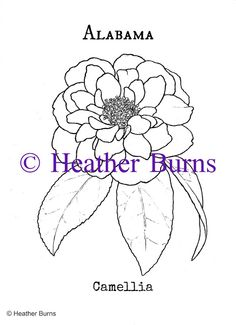 State Flowers of the USA : Alabama State Flower, Camellia Coloring Page