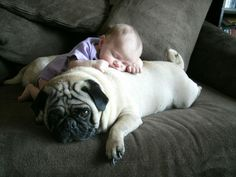 babies and pugs! babies and pugs! Amor Pug, So Cute Baby, Cute Kids, Animals For Kids, Baby Animals, Cute Animals, Animals Images, Pug Love, I Love Dogs