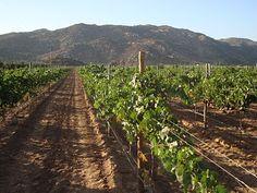 Ensenada's Wine Country!