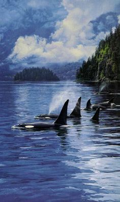 Ancient Mariners orcas by wildlife artist Daniel Smith available from Snow Goose gallery