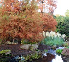 Autumn in the Edinburgh Botanics