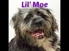 Lil Moe