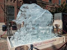 Elephant ice sculpture in Distillery District helps non-profit reach its goal World Elephant Day, Downtown Toronto, Ice Sculptures, African Elephant, Distillery, Mount Rushmore, Goal, Canada, Events