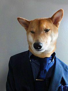 Menswear Dog. He's a good kid, good kid.