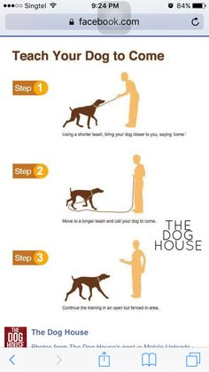 Useful Dog Care And Training Tips - Explore tips and advice for every aspect of your dog's care. Learn how to take care your dog and train your dog. Puppy Training Tips, Training Your Dog, Training Collar, Potty Training, Service Dog Training, Training Academy, Training School, Crate Training, Training Classes