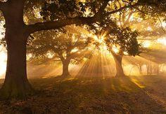 Sun Through Trees - Solitary Beauty