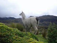 El Cajas National Park (Parque Nacional Cajas)  Cuenca, Ecuador