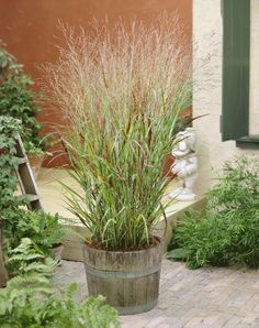 Rustic container planting with ornamental grasses