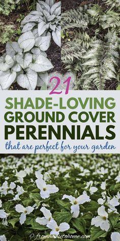 Shade Perennials, Flowers Perennials, Planting Flowers, Tall Perennial Flowers, Shade Shrubs, Flower Gardening, Groundcover For Shade, Flower Garden Design, Love Garden