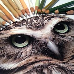 Beautiful Realistic Animal Drawings Pictured next to the Tools Used to Create Them