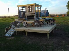 I want one when we get goats.Play fort for sheep/goats! via - Absent Jack Acres Goat Playground, Playground Ideas, Goat Toys, Goat Shelter, Goat Pen, Goat Care, Cute Goats, Mini Goats, Dwarf Goats