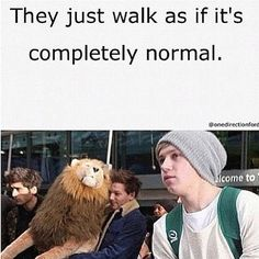 Haha seriously, Lou carrying a big ol' whopping lion [Andy] and yet Niall and Zayn just walk on as if that happens all the time!