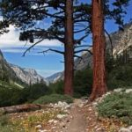 Sequoia National Park - travel delays into the park from 20 - 60 mins. 20 mins on weekends.