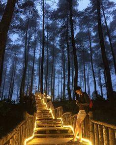 7 Best Orchid Forest Cikole Images Lembang Bandung Bandung City