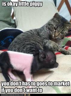 Hahahah so cute!