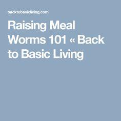 Raising Meal Worms 101 « Back to Basic Living Cheap Chicken Coops, Chicken Coop Run, Chicken Coup, Backyard Chicken Coops, Chicken Lady, Chicken Feed, Chickens Backyard, Meal Worms For Chickens, Meal Worms Raising