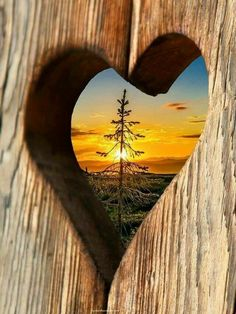 Why is love so important? Can we survive without love? Does love make the world go round? Does love help us overcome challenges in life? What kind of. Heart In Nature, Heart Art, Beautiful World, Beautiful Places, I Love Heart, Jolie Photo, Love Symbols, Pretty Pictures, Heart Shapes