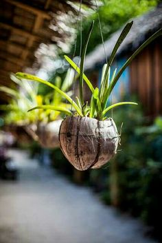 Hanged Coconut shell plant holder!  Shop our 100% natural and eco-friendly Coconut Bowls at www.coconutbowls.com