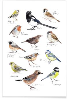 Plakat Vögel - Janine Sommer - Premium Poster