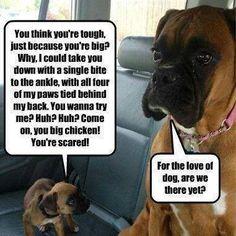 Boxer shaming....