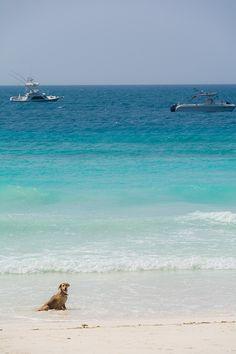 美しいヌングイ ビーチ タンザニア旅行でザンジバルまで足を伸ばすなら。観光の見所まとめです。