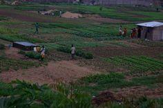 Benin, Africa 2011, december, gardening