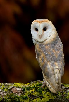 Thinking of this as a tattoo idea? but with different colors? or different owl?