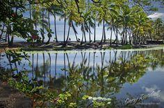 Punalu'u Pond, Big Island