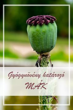 Health 2020, Maker, Superfoods, Herbalism, Spices, Herbs, Vegetables, Healthy, Herbal Medicine