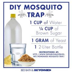 How to make a DIY Mosquito Trap.