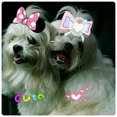 Meus amores!!