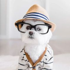 World's Most Fashionable Dog - Toby