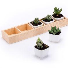 Amazon.com : EPGardening Mini Succulent Flowerpot / 5 Ceramic Pots with Solid Wooden Box : Patio, Lawn & Garden