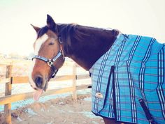 The forecast is calling for snow today in Massachusetts. Sinna is nice and toasty in his new SmartBlue Thinsulate Turnout Blanket and looks adorable with his matching Kensington Breakaway Halter...not to mention his priceless facial expression. Give this photo a caption and then tell us, how do you prepare for the snow when it comes to your horses and barn? (Thanks to Felicia Reinhard for sharing this photo!)