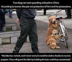 Best guard dogs ever.