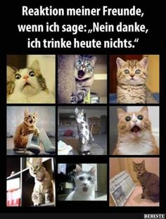 Funny Animal Pictures Of The Day & 26 Pics Funny Animal Pictures, Funny Photos, Cool Pictures, Tierischer Humor, Man Humor, Animals And Pets, Funny Animals, Cute Animals, Really Funny