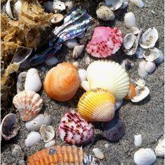 Sanibel Island, Florida.... world famous for sea shells.